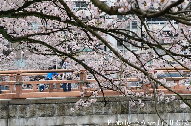 春の福井テレビ祭 (5)