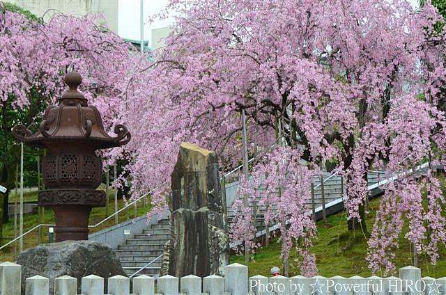 春の福井テレビ祭 (6)