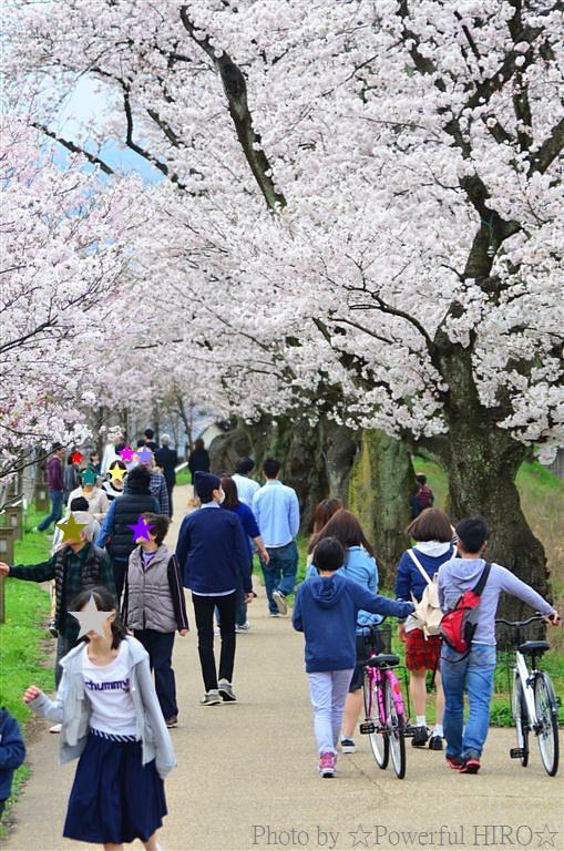 春の福井テレビ祭 (21)