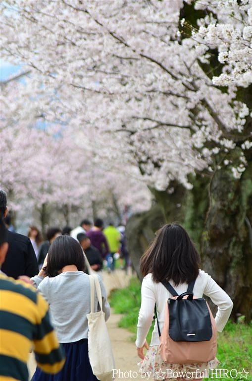 春の福井テレビ祭 (23)