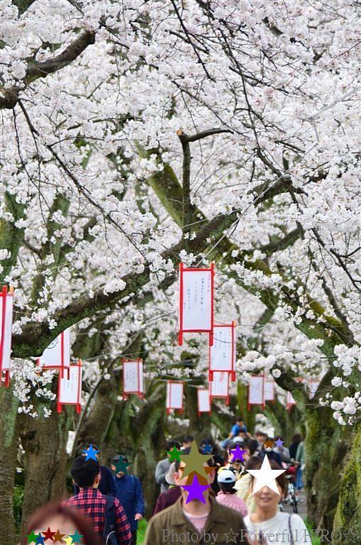 春の福井テレビ祭 (24)