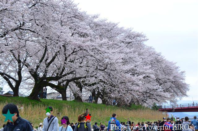 春の福井テレビ祭 (25)