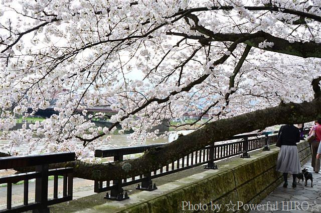 春の福井テレビ祭 (31)