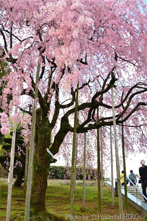 春の福井テレビ祭 (35)