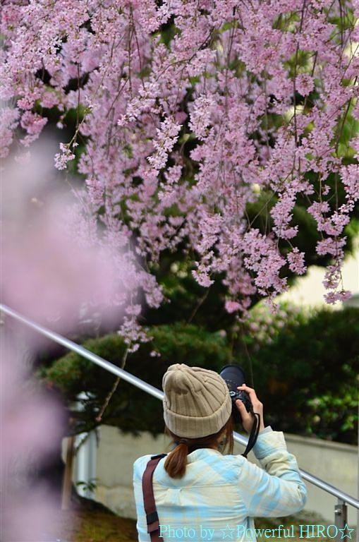 春の福井テレビ祭 (37)