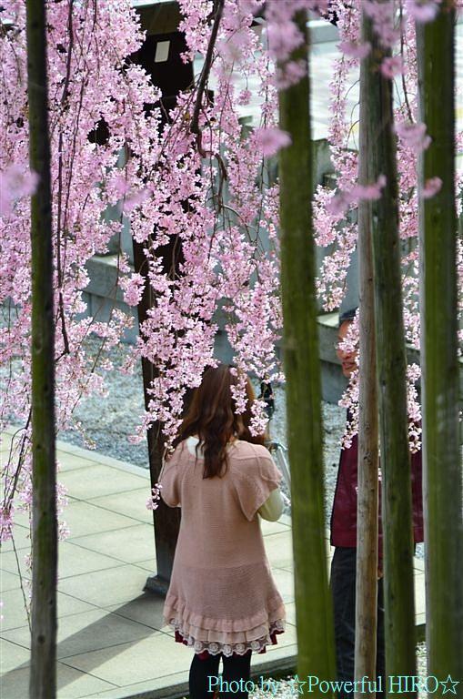 春の福井テレビ祭 (38)