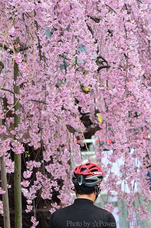 春の福井テレビ祭 (39)