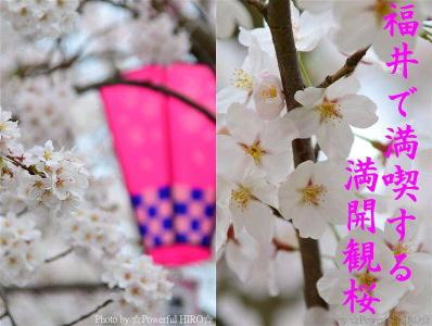 春の福井テレビ祭 (22)