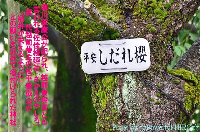 春の福井テレビ祭 (36)
