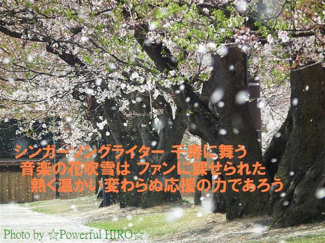 美しさは桜吹雪まで