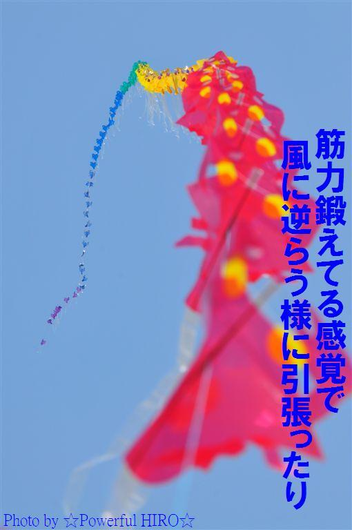 世界の凧の祭典 (53)