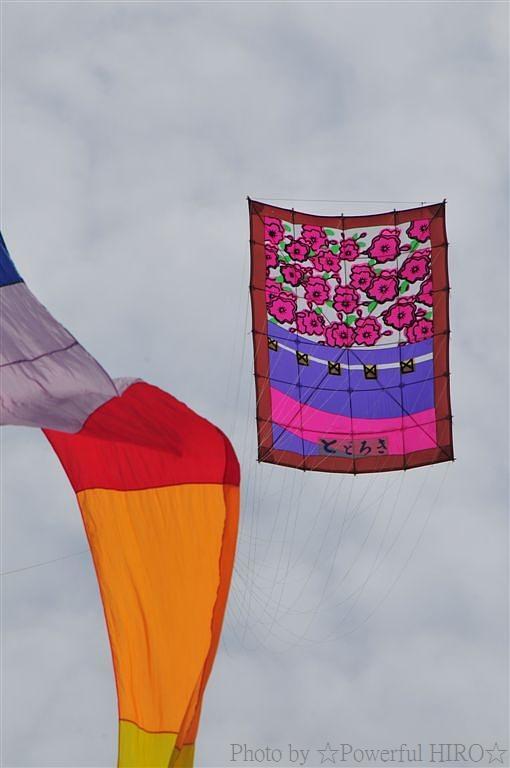 世界の凧の祭典 (60)