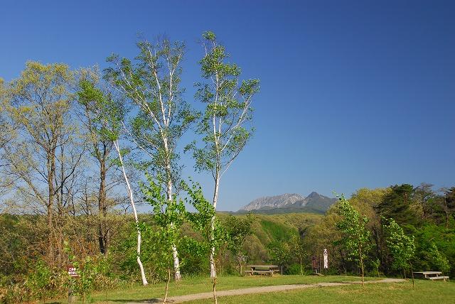 大山と花 (8)