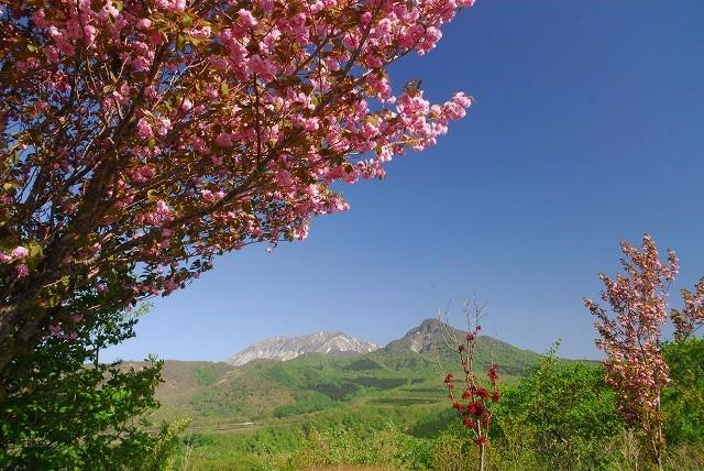 大山と花 (56)