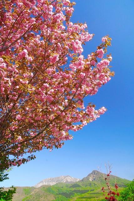 大山と花 (68)