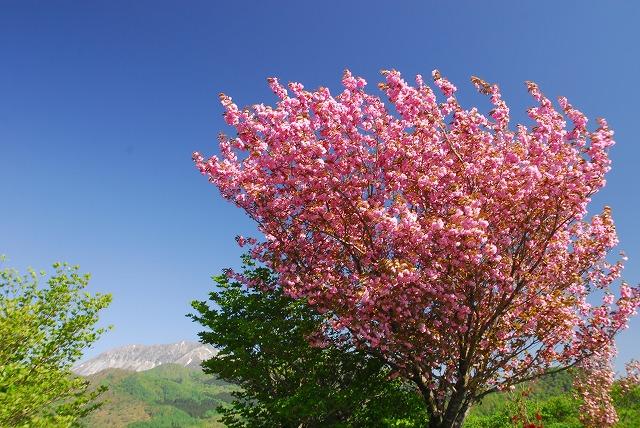 大山と花 (79)