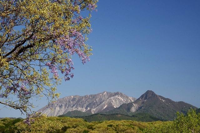 大山と花 (101)
