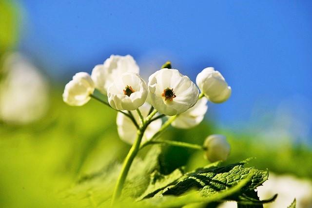 大山と花 (129)