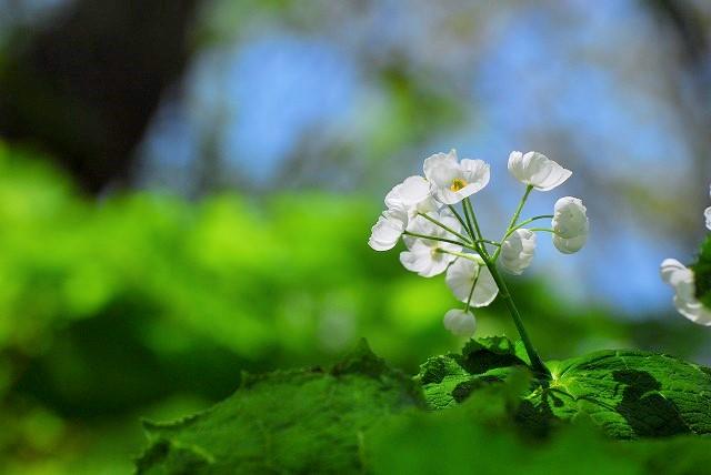 大山と花 (158)