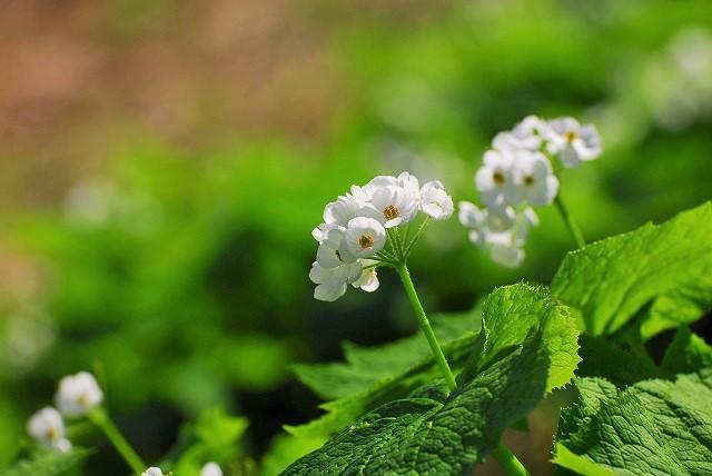 大山と花 (142)