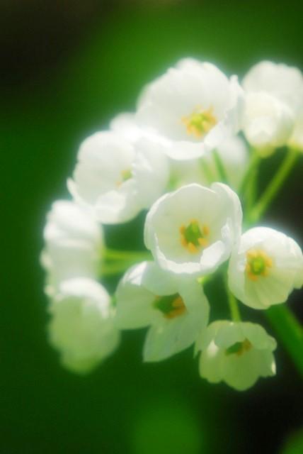 大山と花 (298)