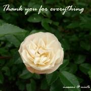 ありがとうのバラ