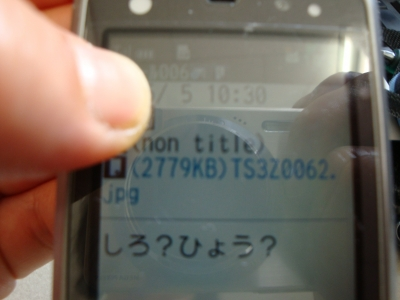 DSC04894.jpg