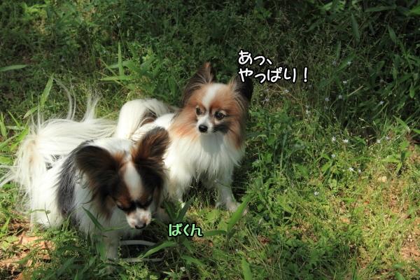 IMG_1433犬@写真部 5月犬@写真部 5月
