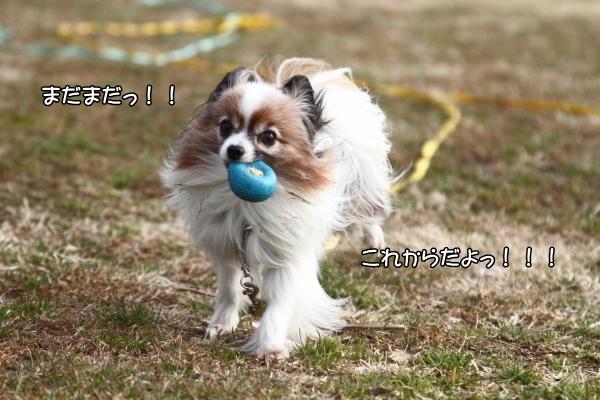 IMG_4980走り初め走り初め