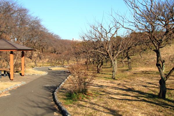 IMG_5088根岸森林公園根岸森林公園