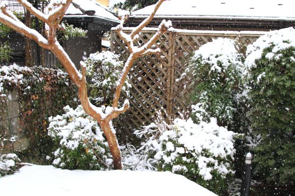 IMG_5569初雪初雪