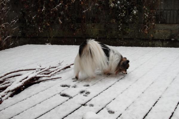 IMG_5506初雪初雪
