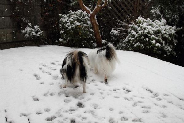 IMG_5532初雪初雪