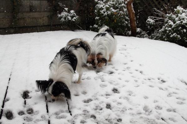IMG_5533初雪初雪