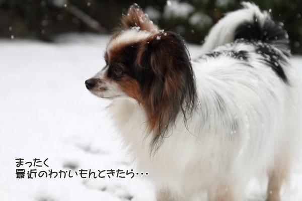 IMG_5534初雪初雪