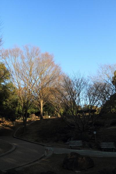 IMG_5692ふるさと公園ふるさと公園