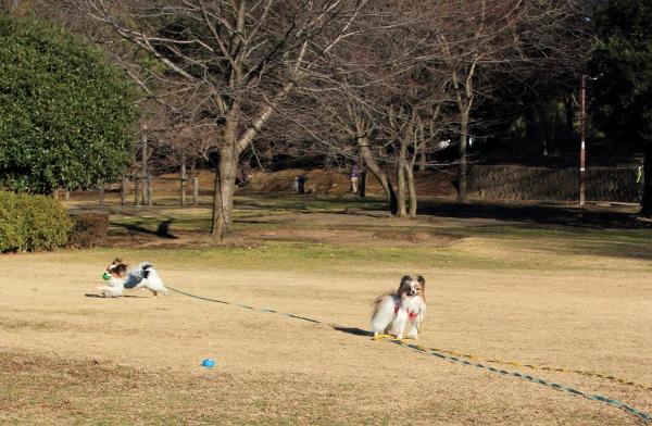 IMG_5589ふるさと公園ふるさと公園