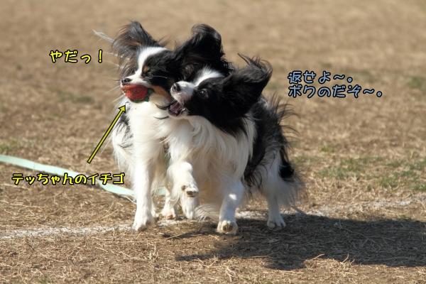 IMG_5797テッちゃん蓮くんテッちゃん蓮くん