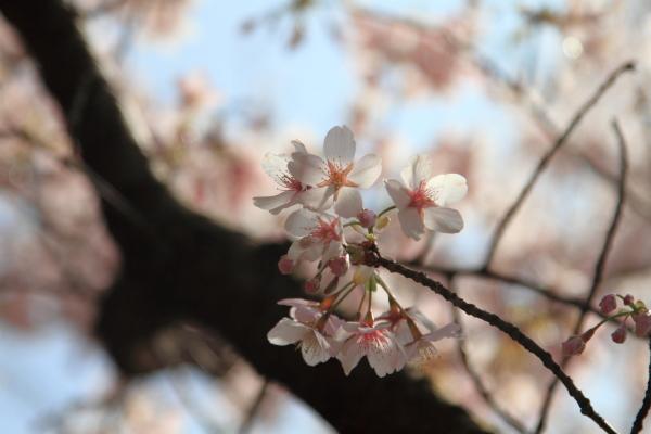 IMG_6408くうちゃん お花見くうちゃん お花見