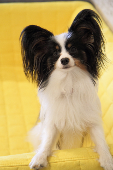 IMG_6524アウラ 小型犬レッスンアウラ 小型犬レッスン