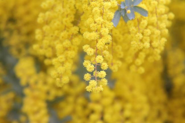 IMG_5229桃の花 2015桃の花 2015
