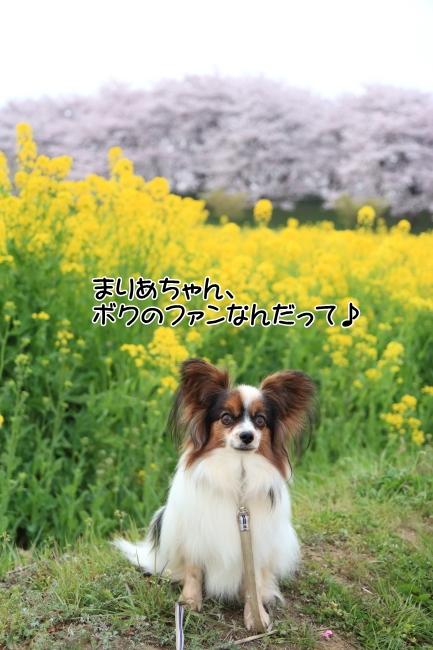 IMG_5626権現堂桜堤権現堂