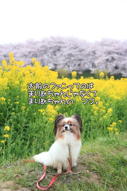 IMG_5620権現堂桜堤権現堂