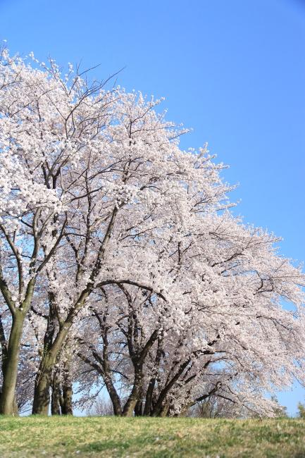 IMG_5742八幡山公園八幡山