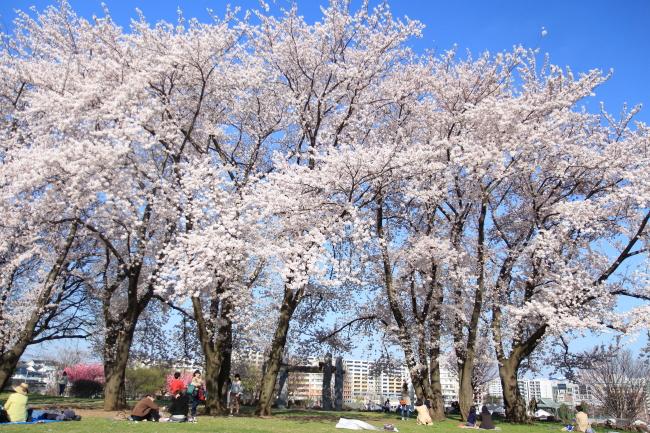 IMG_5719八幡山公園八幡山