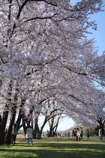 IMG_5713八幡山公園八幡山