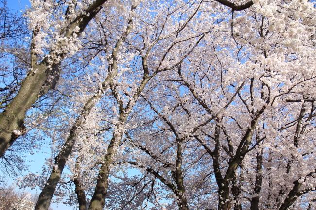 IMG_5740八幡山公園八幡山