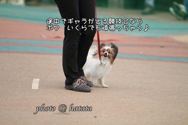 2015_03_29 小田原074-DPP_74