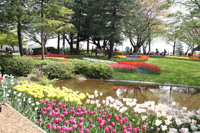 IMG_6782昭和記念公園 1チューリップ サブレ