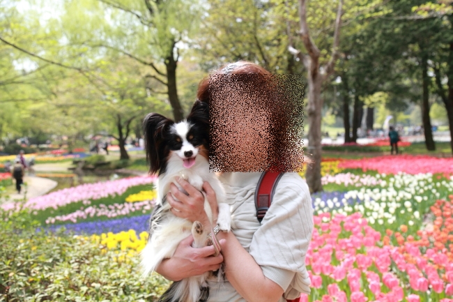 IMG_6832昭和記念公園 1チューリップ サブレ